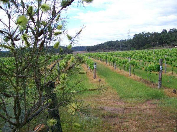 Stone Hill Vineyard