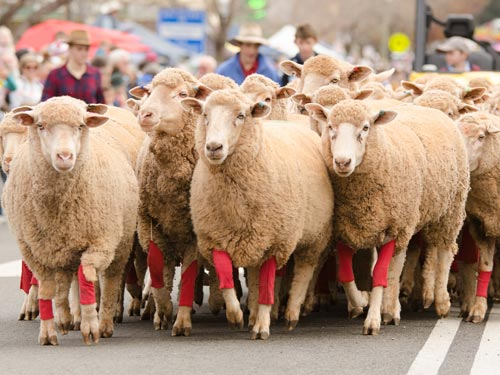Merriwa Festival of the Fleeces