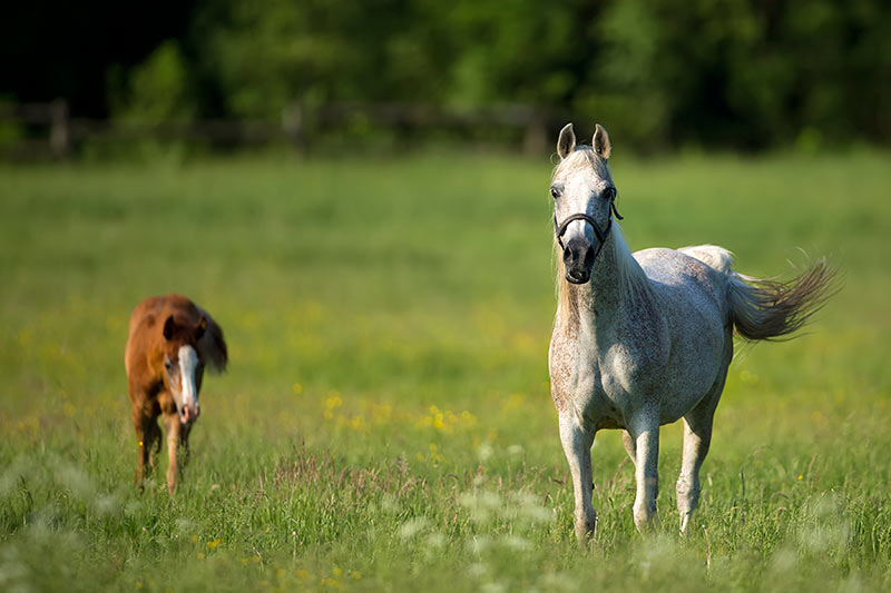 Jerrys Plains is home to some substantial horse-breeding properties